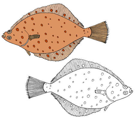 Beautiful flounder fish isolated, hand drawing. Set of fish in color and white and black. Vector illustration.