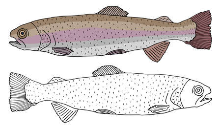 Rainbow trout fish icon isolated, hand drawing. Set of beautiful fish in color and white with black. Vector illustration