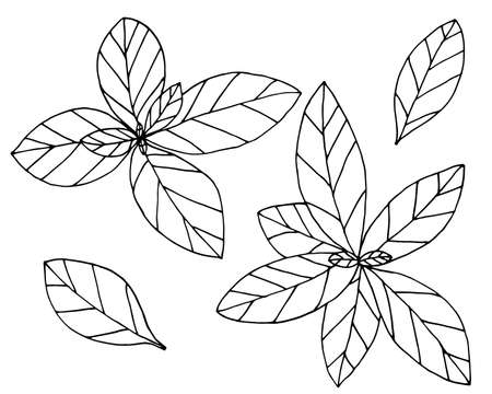 Basil hand drawn isolated on white background, set. Plant with leaves, spice for food. Vector illustration. Illustration