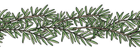 Seamless brush, pattern of rosemary branch. Vector illustration. Illustration
