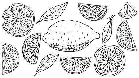 Collection of beautiful hand drawing icons of lemon fruit, isolated. Set of contour of whole lemon, slice, quarter. Vector illustration.