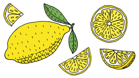 Hand drawn of color lemon or lime fruits, set. Whole lemon with leaves, sliced, half. Vector illustration Illustration