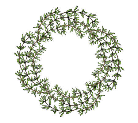 Thyme plant wreath hand drawn. Beautiful circle frame, template. Vector illustration. Ilustração