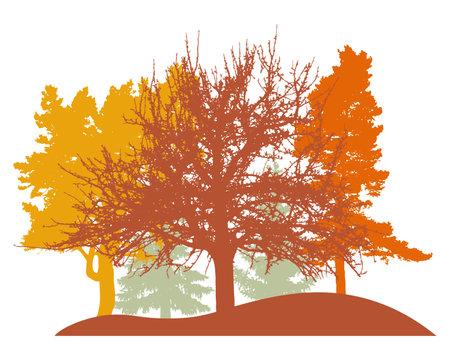 Autumn woodland, silhouette of oak, linden, poplar, spruce trees. Beautiful nature, landscape. Vector illustration Vecteurs