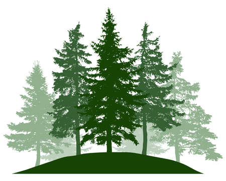 Summer woodland, silhouette of spruce trees. Beautiful nature, landscape. Vector illustration