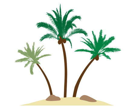 Beautiful palm trees with coconuts on island, sand, stones. Vector illustration