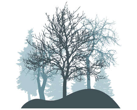 Winter season, silhouette of snowy fir trees, bare trees. Beautiful nature, woodland. Vector illustration