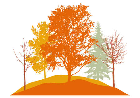 Autumn season, silhouette of birch, bare trees, fir trees and other. Beautiful nature, woodland. Vector illustration
