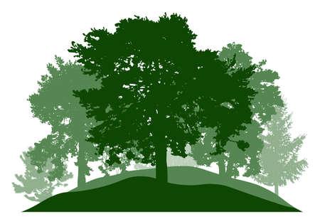 Summer season, silhouette of oak, poplar, pine, fir trees. Beautiful nature, woodland. Vector illustration