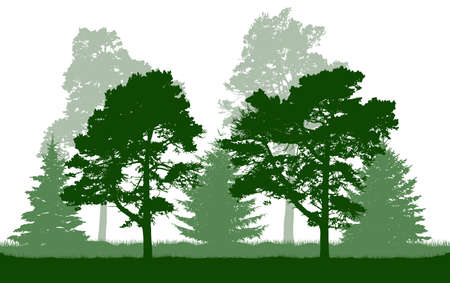Silhouette of green pine, fir, coniferous trees. Beautiful summer forest. Vector illustration.