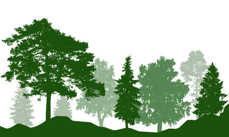 Silhouette of beautiful summer forest. Real fir trees, pine, coniferous trees, birch and others. Vector illustration.