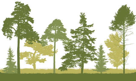 Silhouette of spring forest. Beautiful fir trees, pine, coniferous trees. Vector illustration. Ilustração