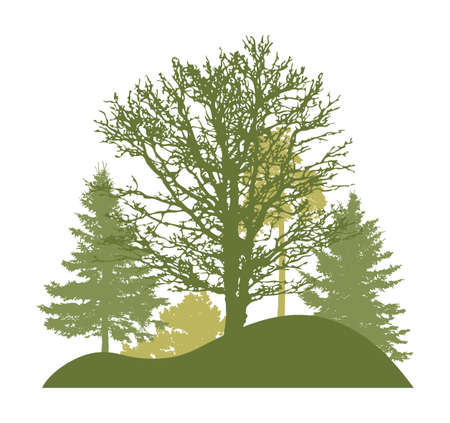 Spring trees. Silhouette of beautiful bare oak, spruces and pine on hill. Vector illustration. Ilustração