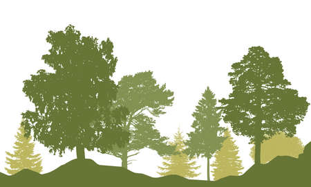 Spring season. Silhouette of beautiful forest. Different trees, birch, fir, pine, coniferous trees. Vector illustration. Ilustração