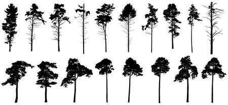 Pine trees silhouette isolated, set. Coniferous forest. Vector illustration.