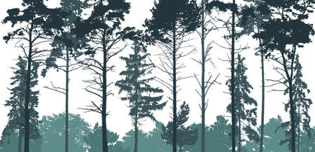 Pine forest silhouette. Natural coniferous trees. Beautiful landscape, woodland. Vector illustration Vectores