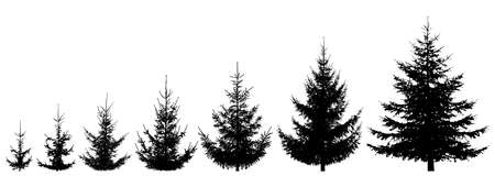 Growth spruce tree. Life process of growing fir tree, silhouette. Vector illustration Ilustração