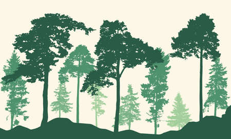 Realistic pines and spruce trees. Coniferous forest silhouette. Vector illustration