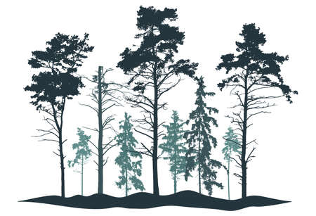 Coniferous forest silhouette. Realistic pine and fir trees. Vector illustration