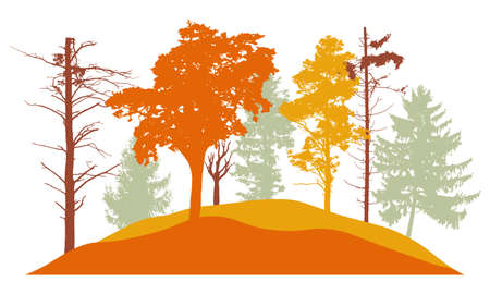 Autumn forest, silhouette of bare tree