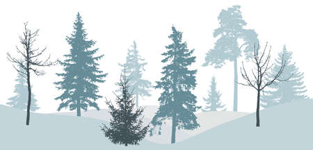Winter forest, silhouette of bare tree, spruce, pine. Beautiful nature, landscape. Vector illustration