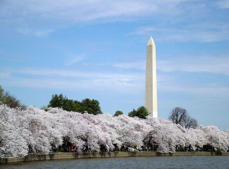 View of first cherry blossoms in washington DC, view of the Washington Monument Stock Photo