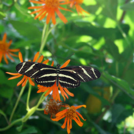 transient: Close up view of a zebra butterfly