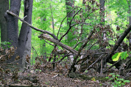 seaonal: View of tree logs and underbrush in a summer forest