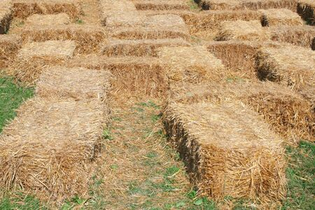 Hay maze, fall theme suitable for harvest,  Stock Photo - 1896177