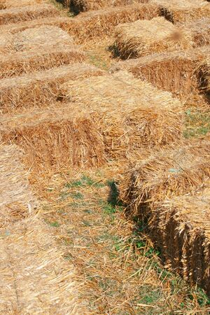 View of a hay maze made for children's games, seasonal theme Stock Photo - 1896176