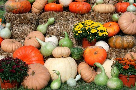적합: Fall harvest arrangement, suitable for a  or thanksgiving themed design 스톡 콘텐츠
