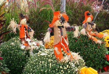 Colorful Halloween or Thanksgiving holiday theme of scarecrows and mums Stock Photo - 1896149