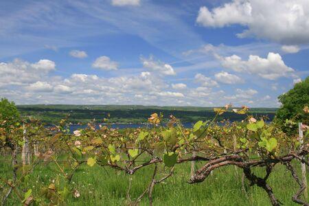 Vue d'une vinyard, l'industrie vinicole, en face du Keuka Lake, un doigt de beaux lacs de New York  Banque d'images
