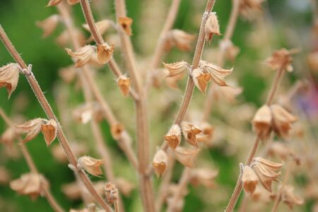 transience: Dry flower stems, suitable to represent old age, aging, illness, passing, season changes