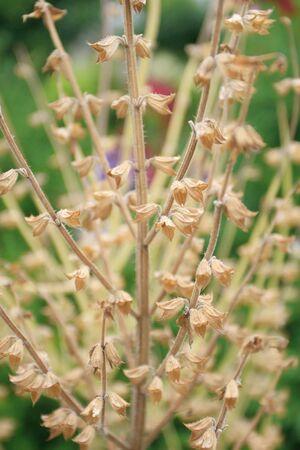 적합: Dry flower stems, suitable to represent old age, aging, season changes 스톡 콘텐츠