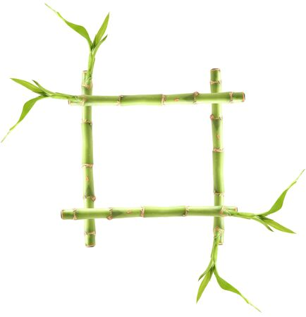 Bamboo frame: bamboo shoots isolated on white