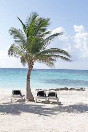 riviera: Empty white sand beach, ocean and palm trees in Mexico, Riviera Maya Stock Photo