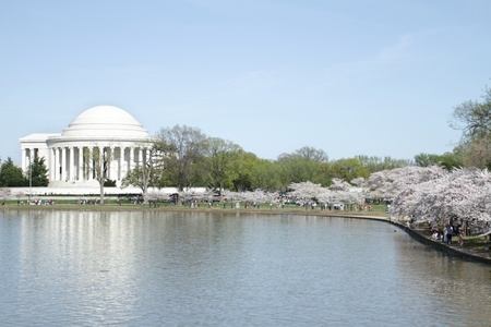 jefferson: Jefferson Memorial in Washington DC during Cherry Blossoms Stock Photo
