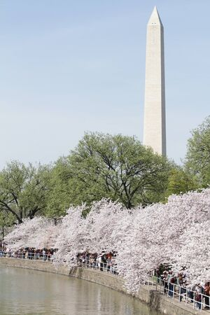 View of the Washington Monument in DC, summer or spring, cherry blossoms