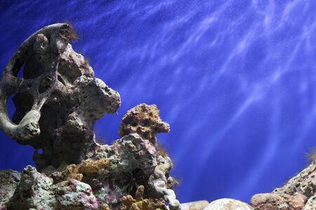 Coral Reef, Tropical Underwater Ocean