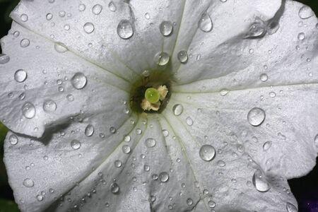 primavera: Fresh flower in the forrest