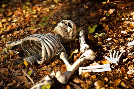 Wild's Halloween Stock Photo - 5749063