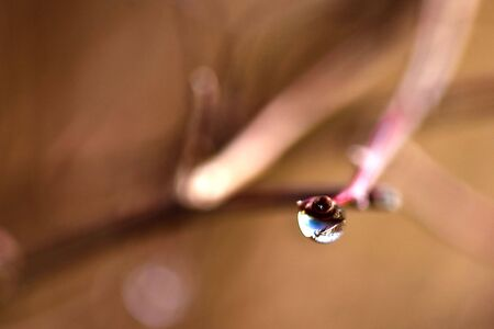 dewdrop on a branch Stock Photo