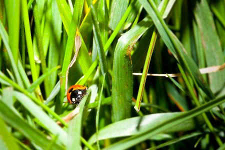 Ladybird in the grass  Stock Photo