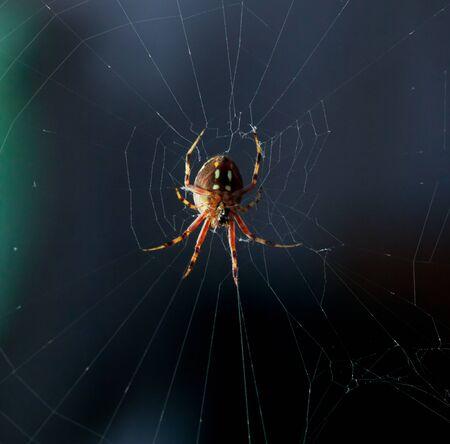 web2: Under spider