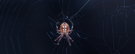 Spider on e web Stock Photo