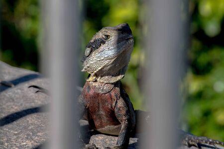 A lizard posing for a shot. Stock Photo