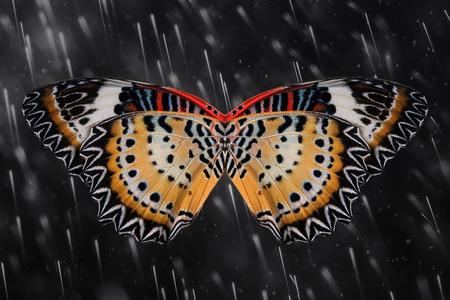 Concept de design. ailes de papillon (The Leopard Lacewing) Banque d'images