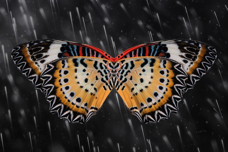 lacewing: Concept design. Butterfly wings (The Leopard Lacewing) Stock Photo