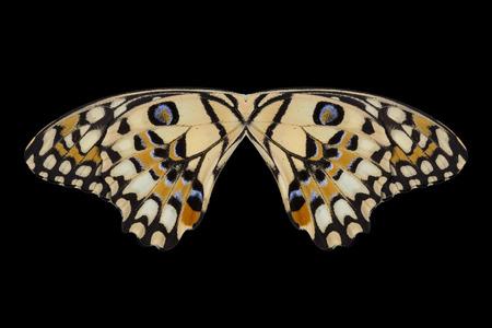 Concept de design. ailes de papillon (chaux papillon) isolé sur fond noir. Banque d'images